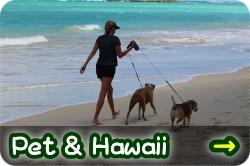 愛犬・愛猫と行くハワイ!ペット移動サポート